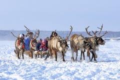 孩子乘坐鹿的队 免版税图库摄影