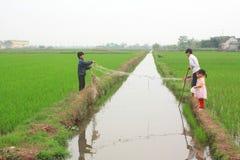 孩子充当稻田在越南的北部的乡下 免版税库存图片