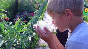 孩子吸入开花的花芳香  股票录像