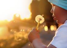 孩子吹蒲公英噘嘴的面颊日落射线强光 库存照片
