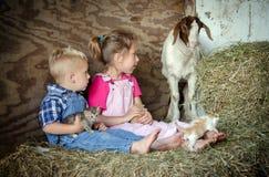 孩子和农厂宠物 库存照片