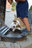 孩子和它的一个喷泉的狗饮用水在心慌・心郁・逐个捉 图库摄影