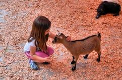 孩子和幼小山羊 免版税图库摄影