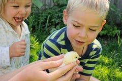 孩子和新出生的小鸡 免版税图库摄影