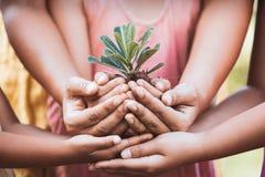 孩子和父母在手上的拿着年轻树种植的 库存照片