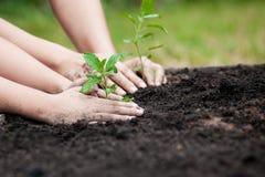孩子和父母递一起种植在黑土壤的年轻树 免版税库存图片