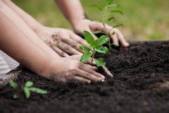 孩子和父母递一起种植在黑土壤的年轻树 库存图片