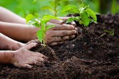 孩子和父母递种植在黑土壤的年轻树 库存图片