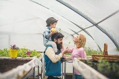 孩子和父母 孩子和父母自温室 愉快的孩子和父母在家庭农场工作 儿童和父母概念 免版税库存图片