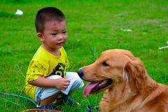 孩子和金毛猎犬狗 免版税图库摄影