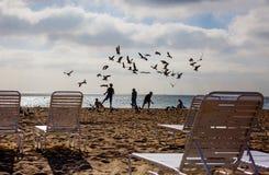 孩子和鸟在海滩迈阿密 库存图片