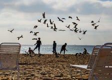孩子和鸟在海滩迈阿密 免版税库存图片
