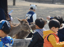 孩子和鹿 免版税库存照片