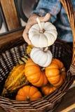 孩子在他的手上的拿着白色南瓜在10月,季节Hol 库存照片