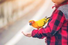 孩子在公园给一只鸟的食物 免版税库存图片