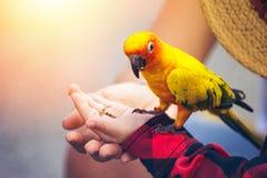 孩子在公园给一只鸟的食物 库存图片