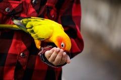 孩子在公园给一只鸟的食物 免版税库存照片
