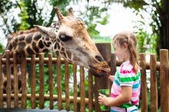 孩子在动物园的饲料长颈鹿 徒步旅行队公园的孩子 免版税库存图片