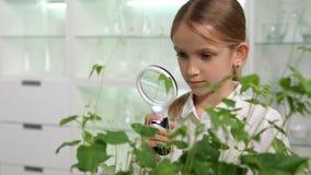 孩子在化学实验室,学习植物教育项目的学校女孩 库存图片