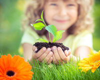 孩子在手上的拿着年幼植物 库存图片