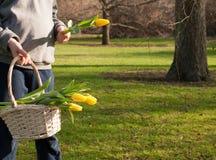 孩子在晴朗的春天公园递拿着与春天黄色郁金香的一个篮子 复制空间 图库摄影