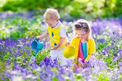 孩子在有会开蓝色钟形花的草花的一个庭院里 免版税图库摄影