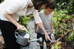 孩子在浇灌植物的庭院里 库存图片