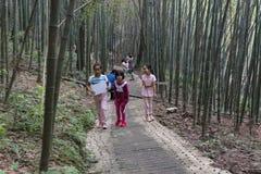孩子在竹森林里 图库摄影