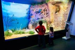 孩子在自然历史博物馆 免版税库存照片