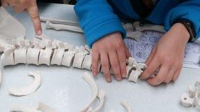 孩子学习解剖学,人类学,装配一个最基本的模型 股票视频