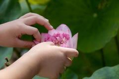 孩子安排莲花的瓣 库存照片