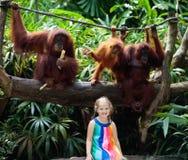 孩子手表猴子在动物园里 孩子和动物 免版税图库摄影