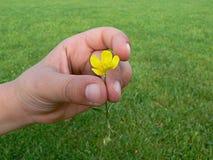 孩子拿着一朵花 免版税库存图片