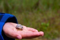 孩子拿着在他的手上的蜗牛 免版税库存照片
