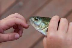 孩子拿着新近地被抓的鱼,栖息处 捕鱼 免版税库存照片