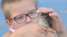 孩子捉住了麻雀并且看它在他们的手上 尊敬的概念对自然和动物的 股票录像