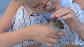 孩子捉住了麻雀并且看它在他们的手上 尊敬的概念对自然和动物的 股票视频