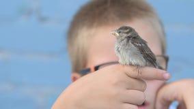 孩子捉住了麻雀并且看它在他们的手上 尊敬的概念对自然和动物的 影视素材