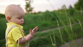 孩子沿在领域的一条道路走,撕下小尖峰和认真地检查它在他的手棕榈  ?? 影视素材