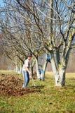 孩子清洁在核桃果树园 库存照片