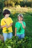 孩子用一棵红萝卜在庭院里 免版税库存照片