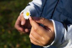 孩子的手有雏菊的 库存照片