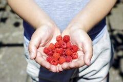 孩子的手用成熟莓 免版税库存图片