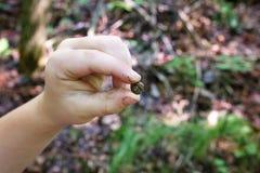 孩子的手藏品微小的空的蜗牛壳外部在森林里 图库摄影