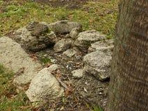 孩子的未玷污的坟墓 库存图片