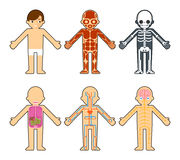 孩子的身体解剖学 免版税库存照片