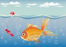 孩子的金鱼-成人的喜悦-欲望的履行 免版税库存图片