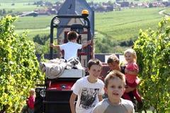 孩子获得乐趣在葡萄收获期间 免版税库存照片