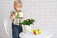孩子要浇灌罐花 库存图片