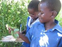 孩子观察植物类型在学校 库存照片
